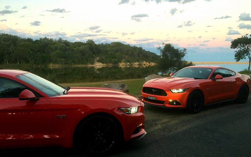 Mustangs-800x500